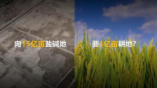 胡(盐碱地).jpg