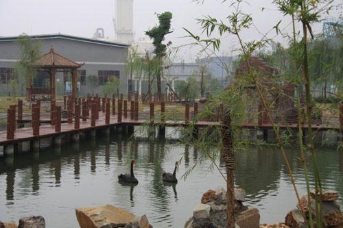 新冶钢废水池被治理成天鹅池2